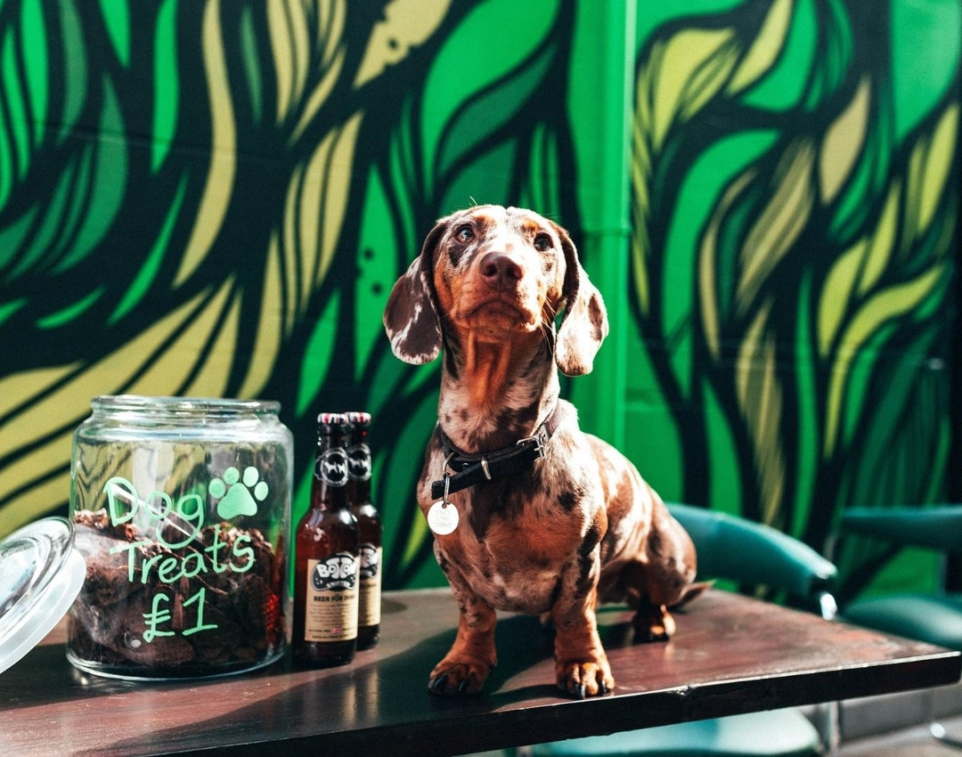 Pints and Pups – Newcastle's best dog-friendly pubs