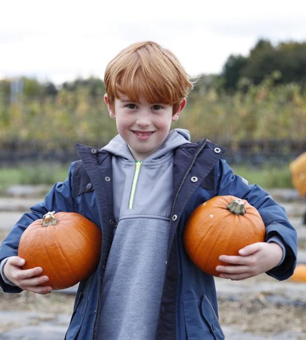 Brockbushes Pumpkin Picking