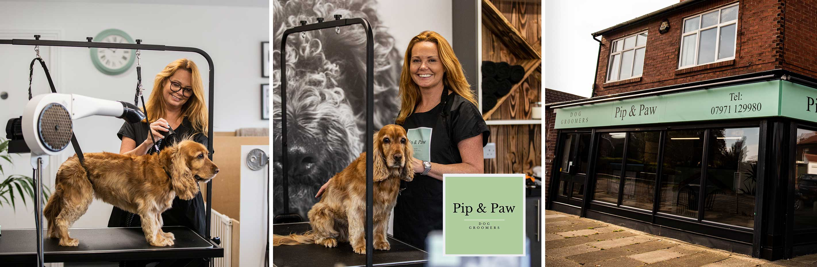 Your dog's new best fur-end: Pip & Paw